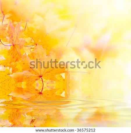 Orange maple leafs - stock photo