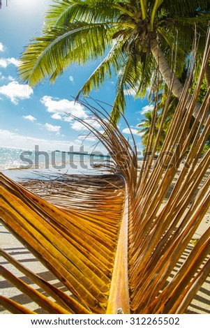 orange palm tree leaf on the beach with some coconut trees on the background - stock photo