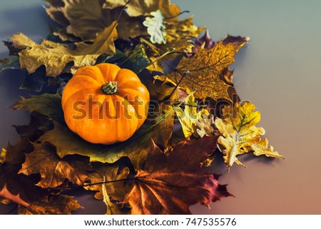 Orange pumpkin laying on a messy bunch of autumn leaves. Tinted Halloween background.