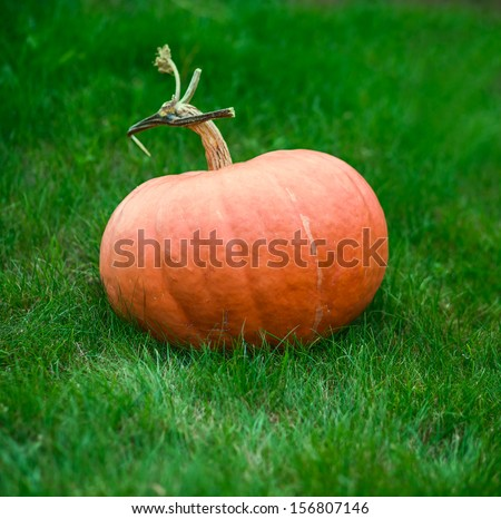 orange pumpkin on grass photo - stock photo