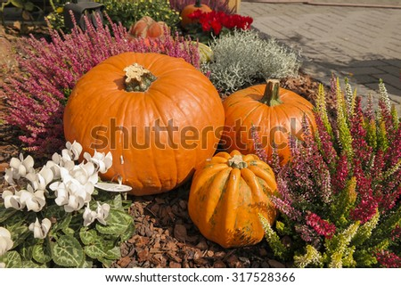Orange pumpkins. Decoration.