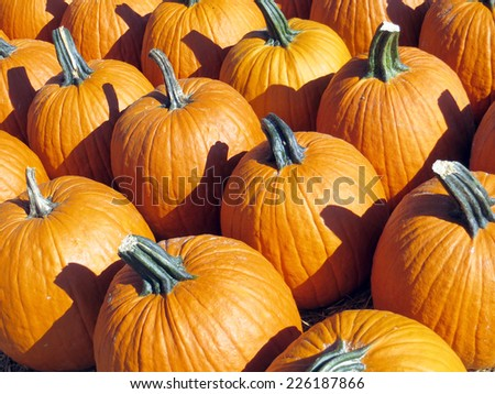 Orange pumpkins for the Fall season