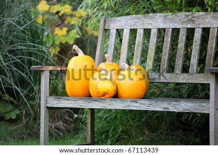 orange pumpkins on a wooden bench in the garden - stock photo