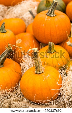 Orange pumpkins on the pumpkin patch.