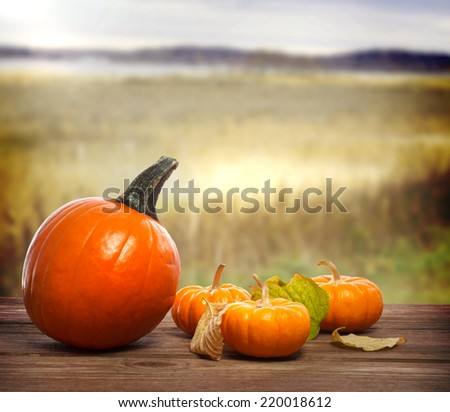Orange pumpkins with autumn brown field background - stock photo