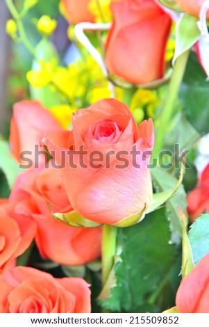 orange roses bouquet - stock photo
