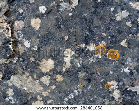 Orange round lichens on a dark grey stone. Can be used as a background. - stock photo