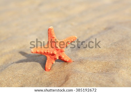 Orange seastar on sandy beach.