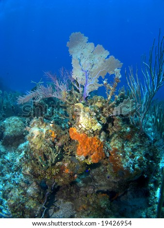 Orange Sponge growing on a Cayman Island Reef with Sea Fan in the Background - stock photo