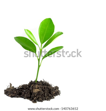 orange sprout - stock photo