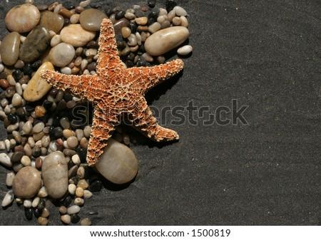 orange starfish and rocks and pebbles on black sand - stock photo