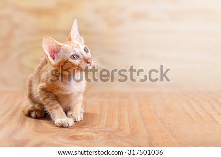 Orange striped kitten (baby cat) sit on wood floor and background, it looking up to the right hand top corner with copy space - stock photo