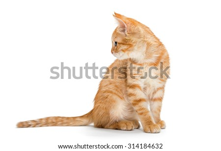 Orange, striped, little kitten isolated on white background. - stock photo