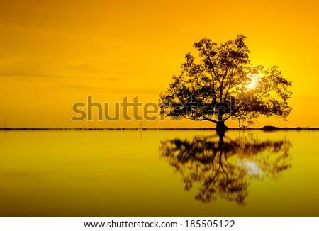 orange sunset via tree silhouette reflection - stock photo