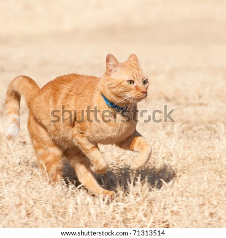 Orange tabby cat running full speed across a grass field - stock photo