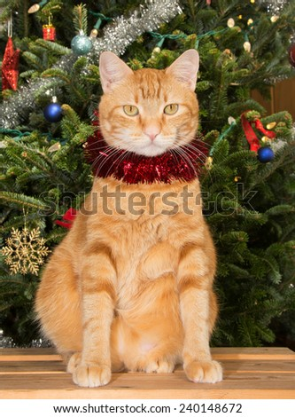 Orange tabby cat sitting in front of a Christmas tree, wearing a strand of red tinsel - stock photo