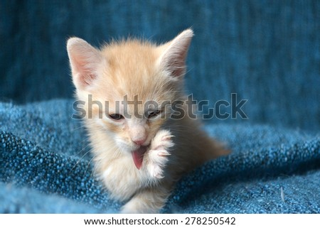 Orange tabby kitten licking front paw, tongue out - stock photo