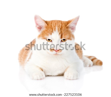 orange tabby kitten lying in front. isolated on white background - stock photo