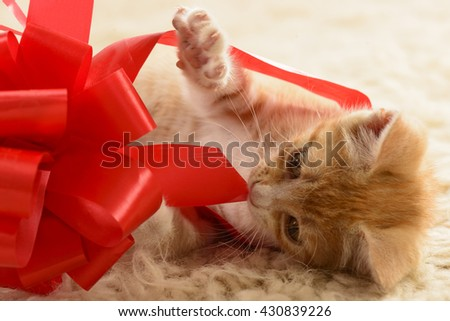 Orange tabby kitten playing with red bow from gift box on beige background - stock photo