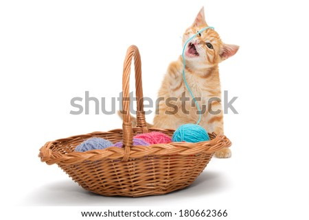 Orange tabby kitten  plays ball of wool