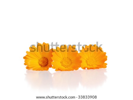 Orange, yellow flowers on a white background