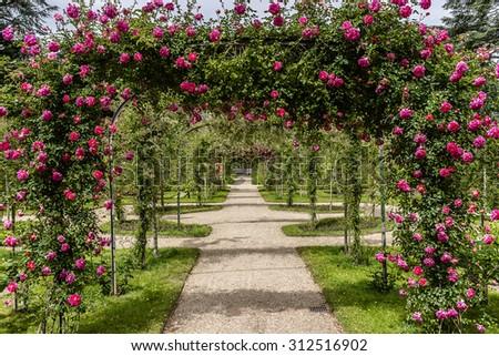 Orangery and garden roses in beautiful Albert Kahn Park. Boulogne-Billancourt, Paris. - stock photo