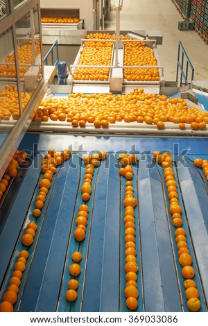 Oranges are in the factory - stock photo