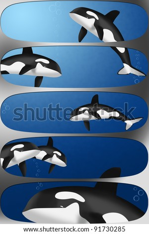 orcas banners - stock photo