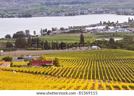 Orchards in Osoyoos Valley, BC, Canada - stock photo