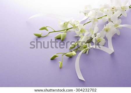 orchid, - stock photo