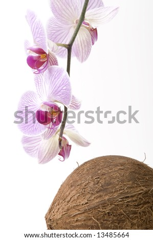 orchid and coco nut - stock photo