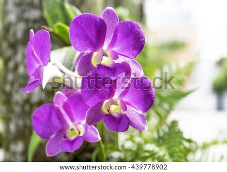 orchid blurred Zen Lily Calm Tree Big Spa Pool Girl Care Lush Macro Relax Swim Up Color Close Flora Stem Head Bloom Plant White Petal Leaf Bud Green Focus Carpel Clean Purple Fresh Event Violet Object - stock photo