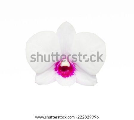 Orchid clipping path