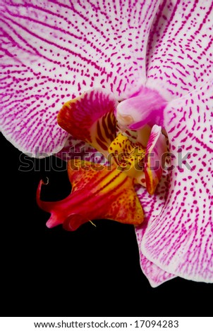 Orchid close up - stock photo