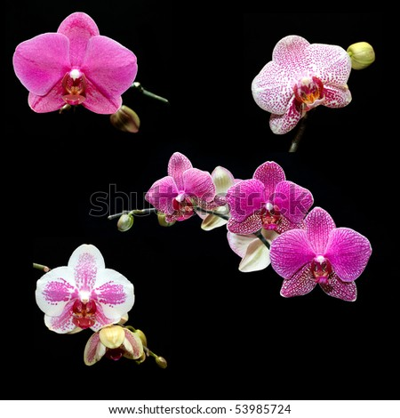 Orchid collection - stock photo