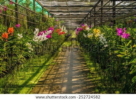 Orchid farm in Chaing Mai province, Thailand - stock photo