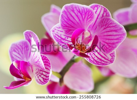 orchid flower bloom with soft focus and blur background - stock photo
