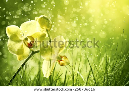 Orchid flower in the field,Closeup. - stock photo