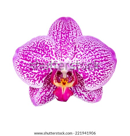 orchid flower isolated on white background with clipping path - stock photo