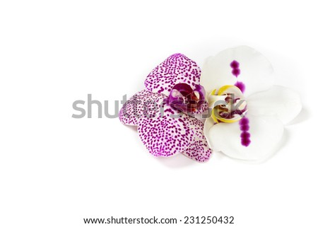 Orchid flower. Macro. Selective focus. Isolated. - stock photo