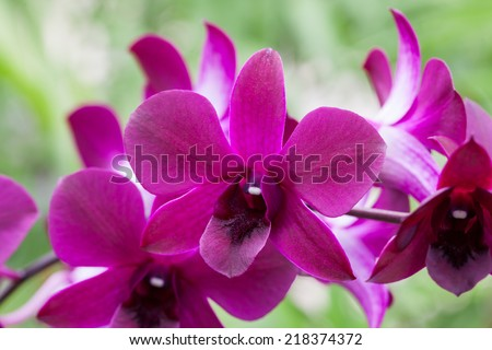 orchid flower on farm in nature