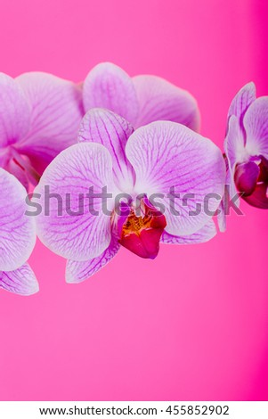 orchid flower, orchid bloom, beautiful orchid