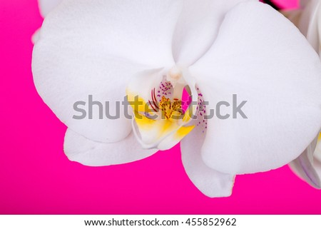 orchid flower, orchid bloom, beautiful orchid - stock photo