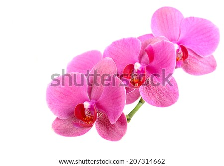 Orchid flower over white background - stock photo