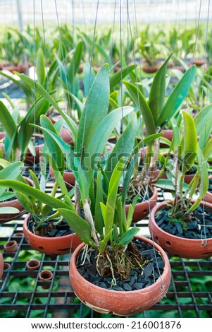 Orchid flower pots on a plant nursery in the orchid farm - stock photo