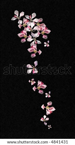 Orchid flower spray with black background lightly textured,  vertical - stock photo