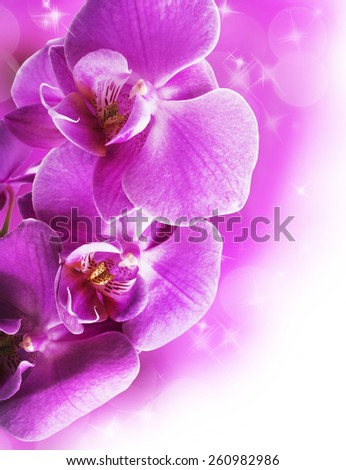 Orchid flowers border - stock photo