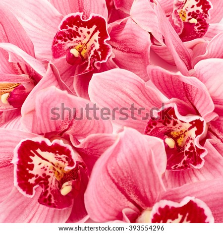 Orchid flowers close up - stock photo