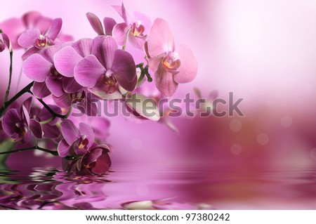 Orchid flowers composition - stock photo