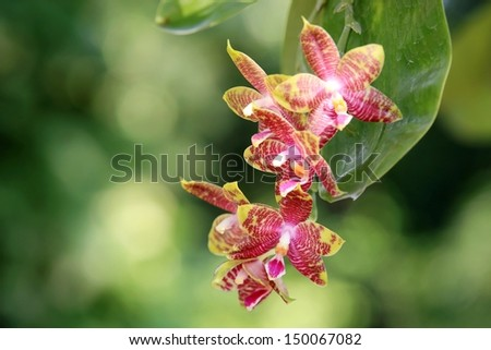 Orchid flowers in the garden - stock photo